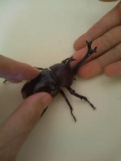 110710_1528 beetle.jpg