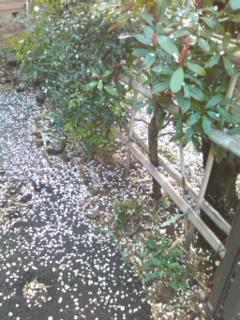 120324_1728 梅吹雪.jpg