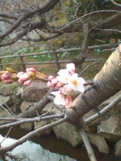 0330_1637 開花.jpg